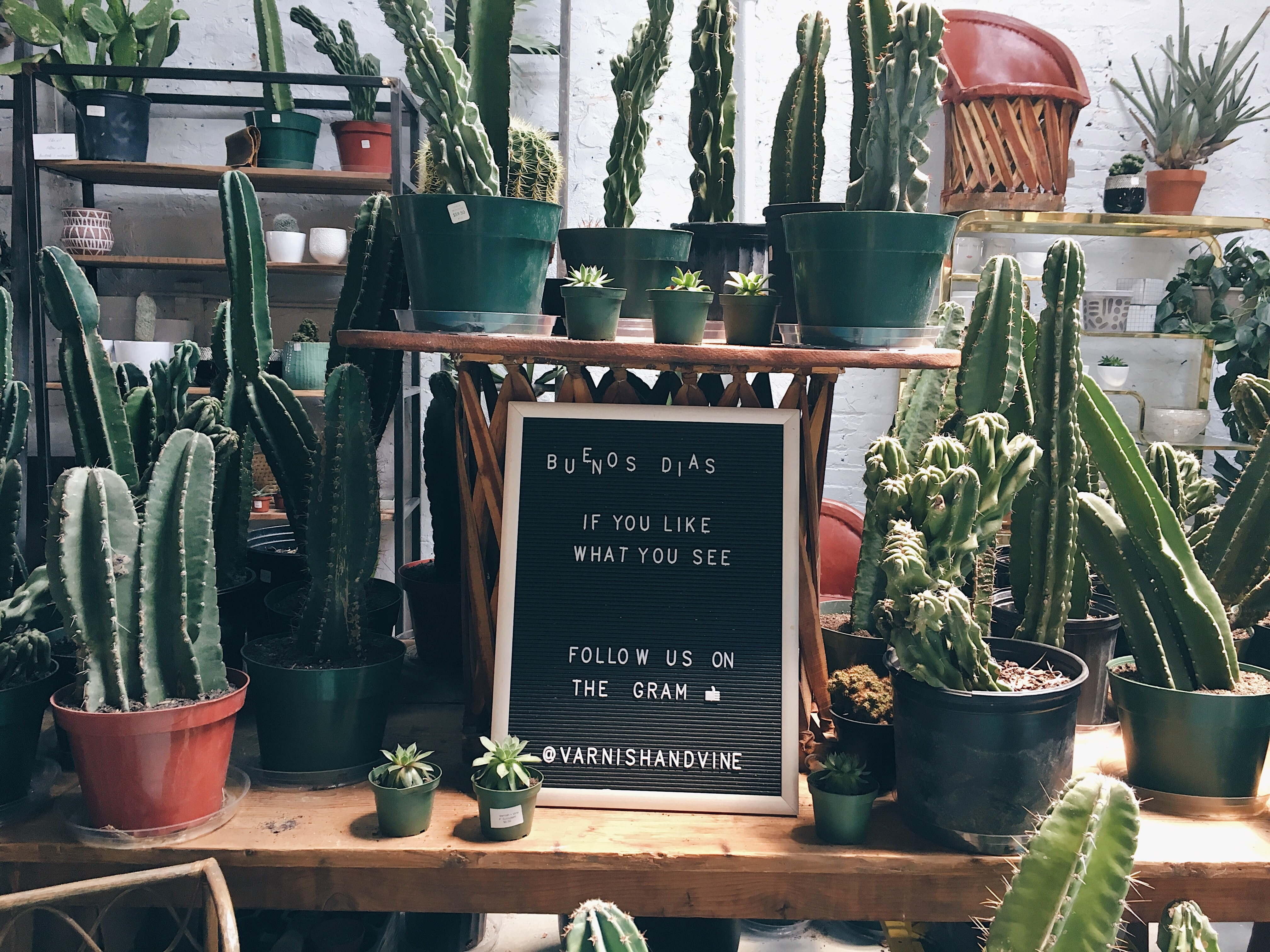 Caring For Cactus Indoors The Easy Guide Indoor Plant Care